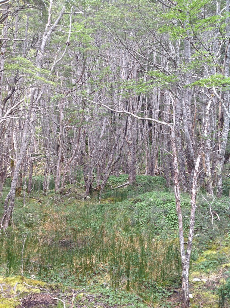 Serene forest at Ainsworth Bay