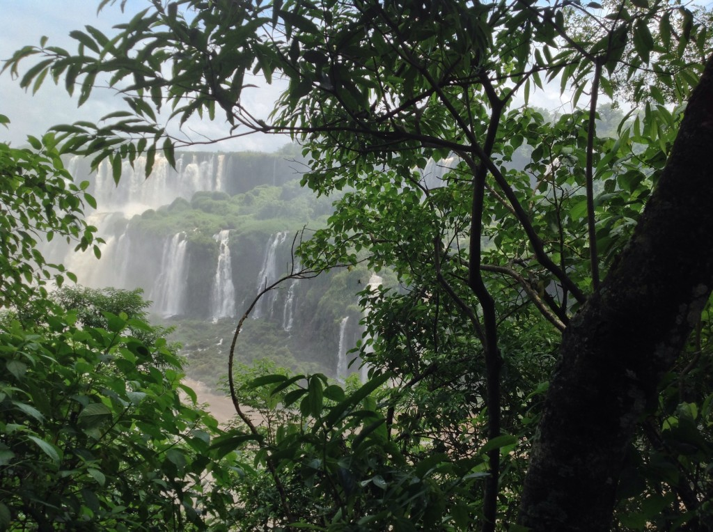 Sneak peak of the falls through the lush summer foliage.