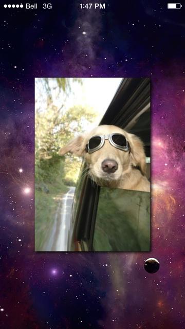 My spirit animal according to Selfie Analyzer.