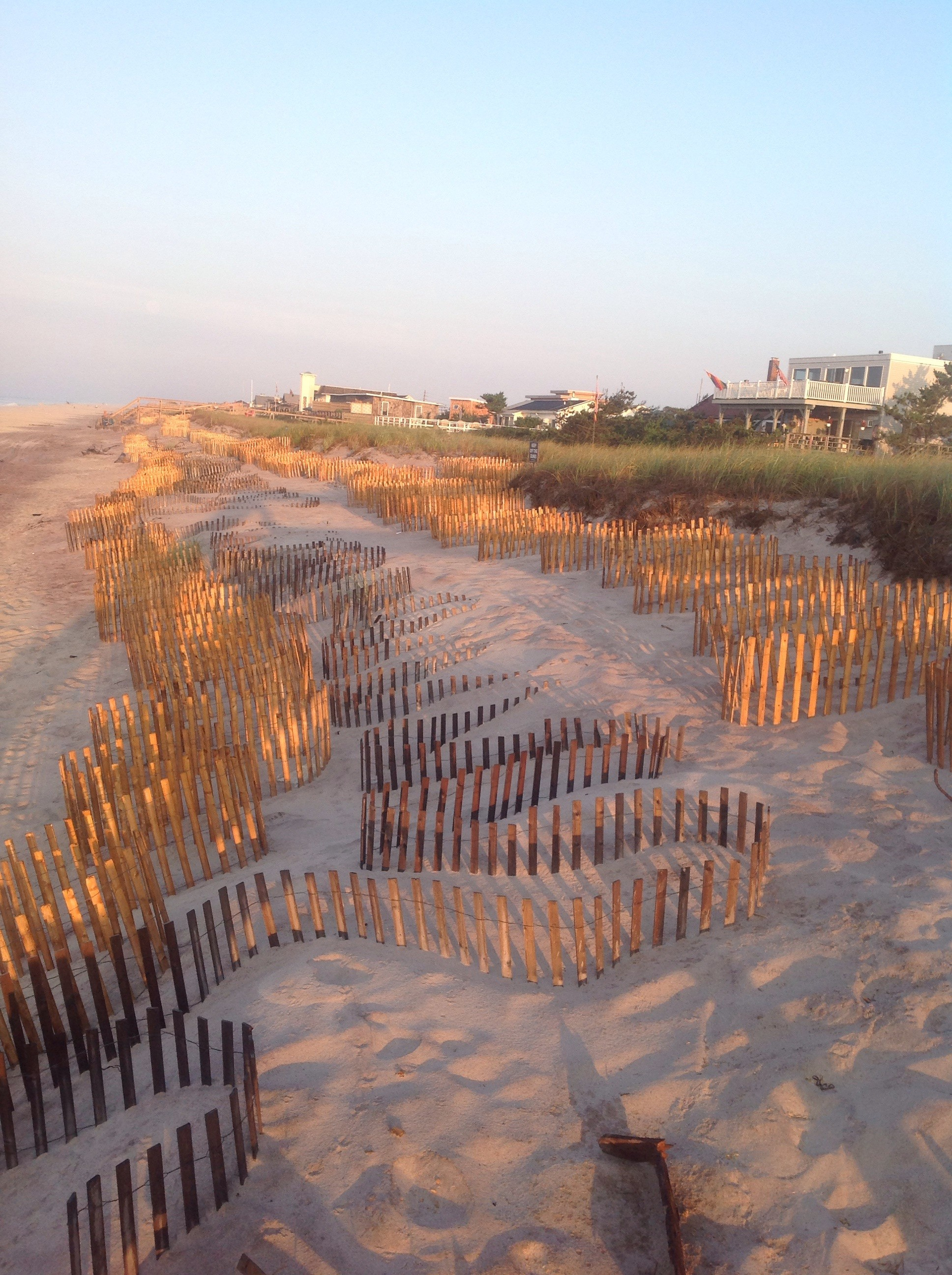 Fencing is used to help collect sand and rebuild the natural dunes.
