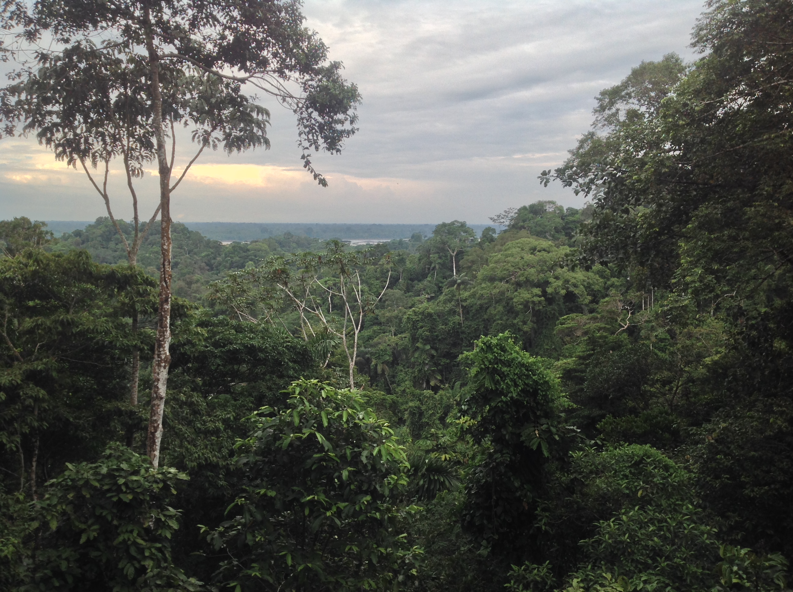 Another stunning view of the jungle.