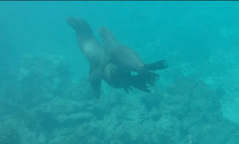 Snorkeling with Sea Lions. Wow!